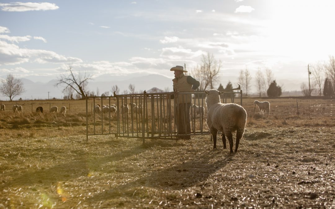 Pastured, Grass-fed, Free Range-What These Phrases Really Mean For Your Meat